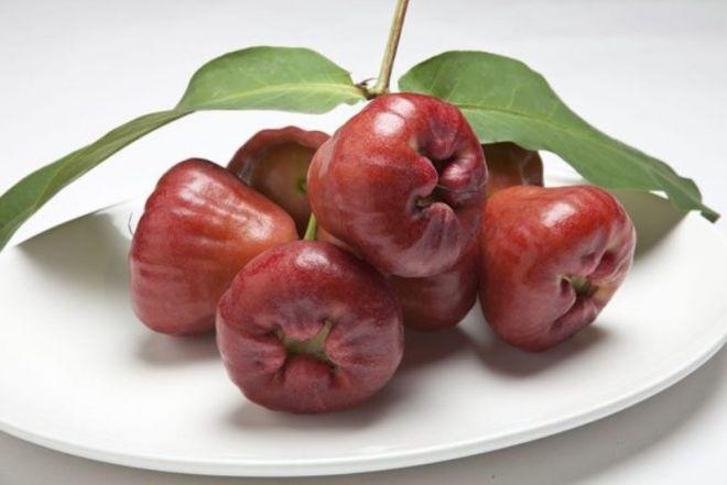 Яблоко — википедия. что такое яблоко
