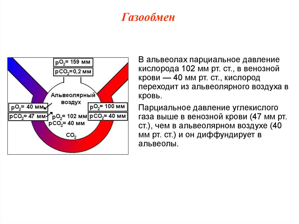 Газовый состав крови: норма, отклонения, причины изменения показателей. газы артериальной крови