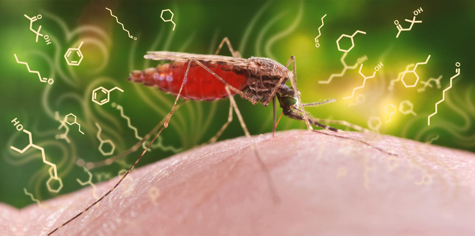 Малярия — википедия