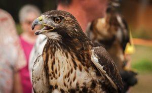 Птицы - фото птиц разных отрядов с названиями и описаниями