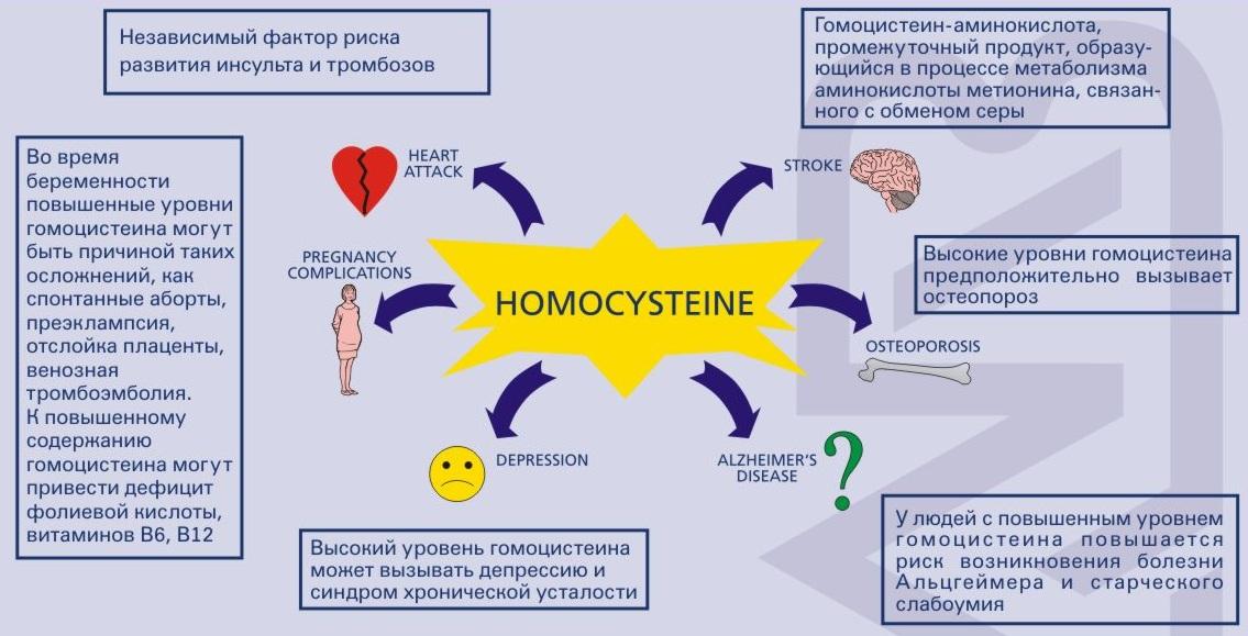 Гормон альдостерон: нормы и особенности его повышения. альдостерон как гормон — что это такое и какие функции он выполняет