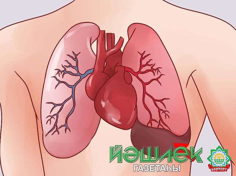 Плеврит легких: симптомы, причины и лечение, диагностика