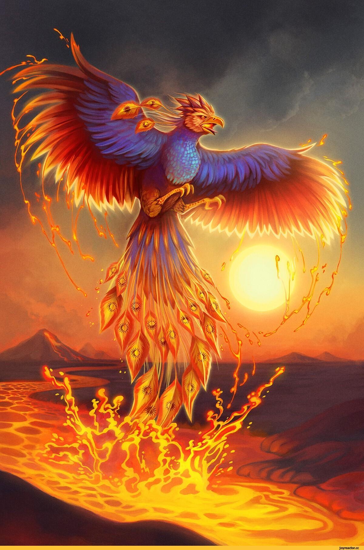 Феникс (значения) — википедия. что такое феникс (значения)