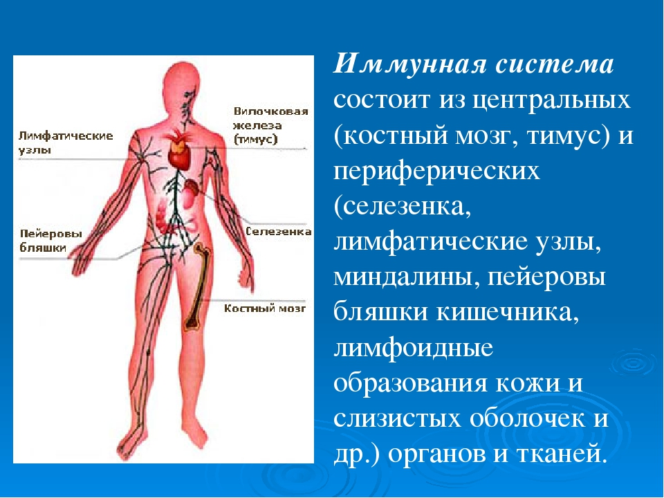 Иммунная система - что это такое? что такое иммунитет? как укрепить иммунитет?