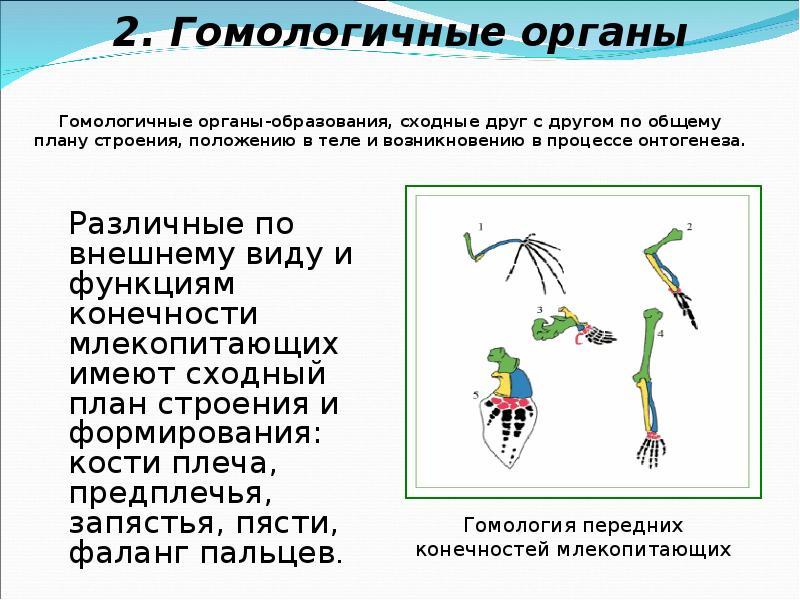 Аналогичные органы: понятие и примеры
