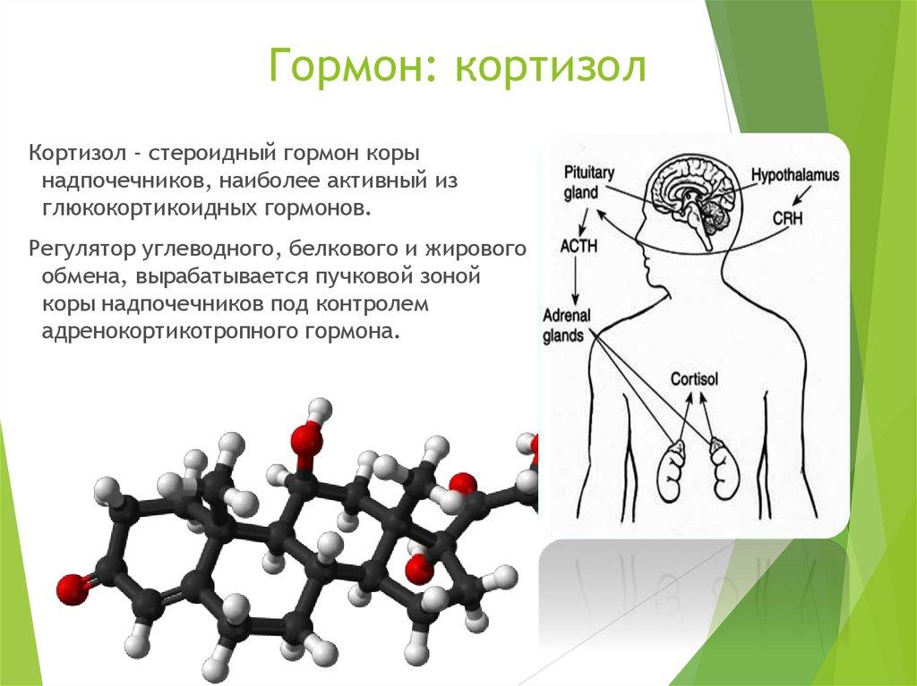 Функции гормона альдостерона, нормы, причины и лечение гормональных нарушений
