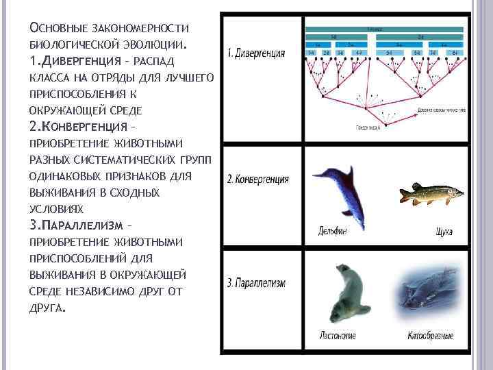 Дивергенция - это в биологии что это? отвечаем на вопрос. примеры дивергенции