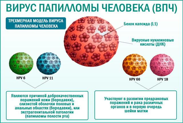 Папилломы: лечение в домашних условиях народными средствами и аптечными препаратами