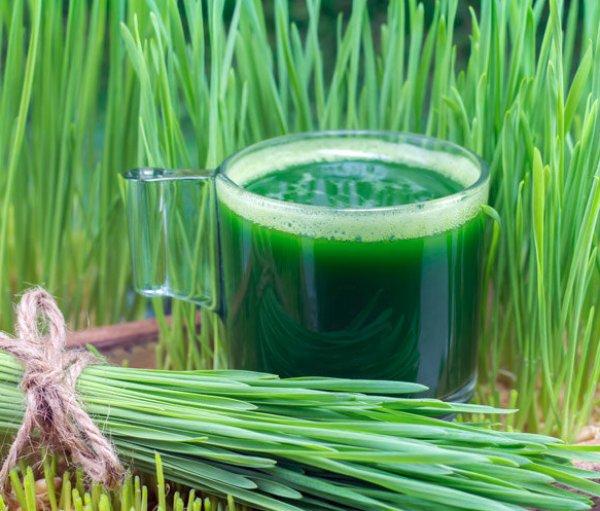 Витграсс (wheat grass): польза и вред, соки, как вырастить? настолько ли полезен витграсс как о нем говорят - новая медицина