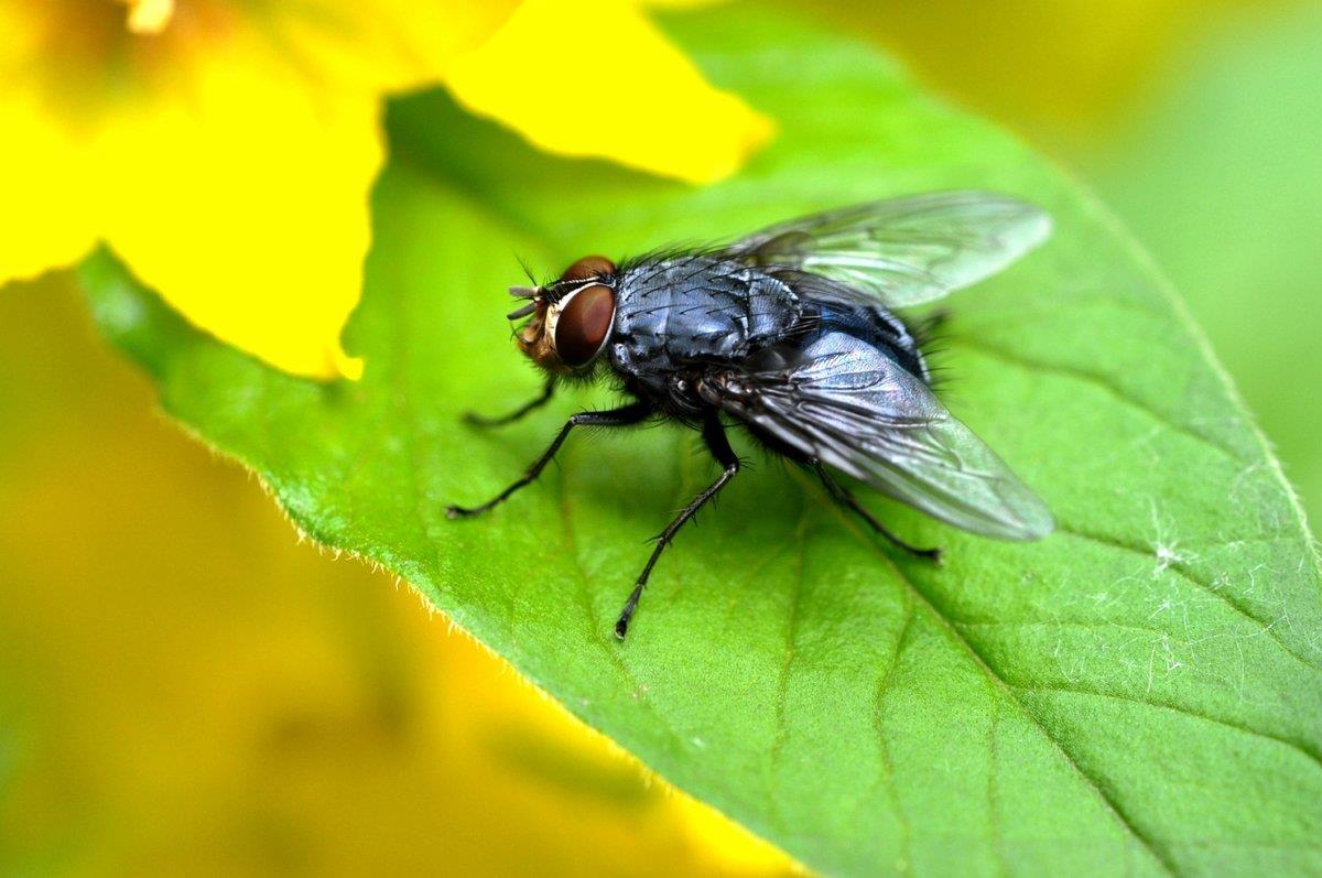 Вред и польза от мух, для чего они нужны в природе и медицине