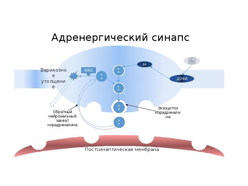 Ацетилхолин   про аутизм и другие нарушения развития