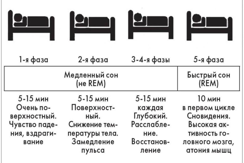Быстрый и медленный сон: какое значение имеют, чем сопровождаются и какова норма