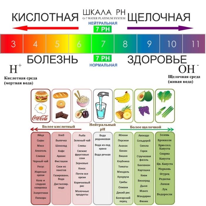 Что такое пурины? пурины в продуктах | волшебная eда.ру