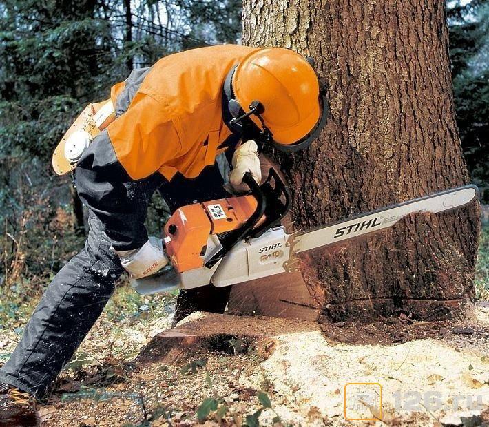 """Просмотр поста """"5 причин не кронировать деревья"""""""