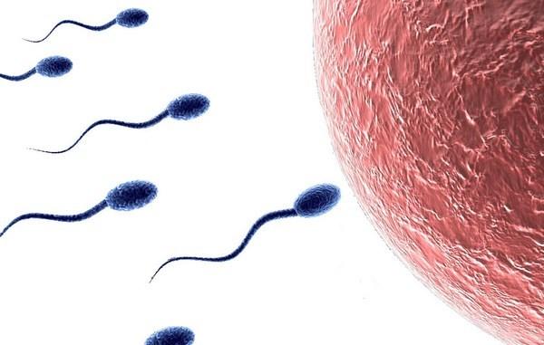 Тератозооспермия у мужчин: что это такое, причины, лечение