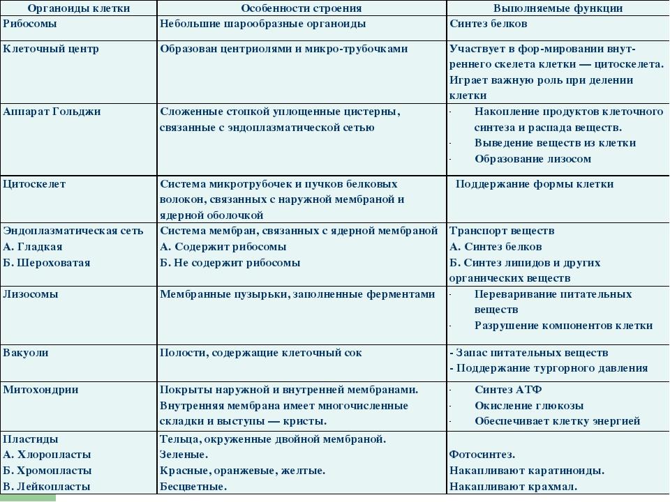 Строение и функции органоидов клетки: таблица, как устроены и действуют двумембранные клетки | tvercult.ru