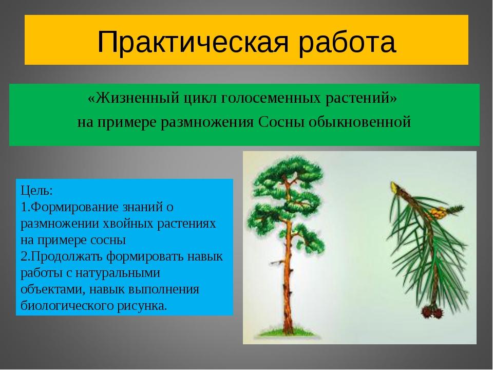 Высшие семенные растения. отдел голосеменные и отдел покрытосеменные. общая характеристика, разнообразие и значение голосеменных и покрытосеменных | биология