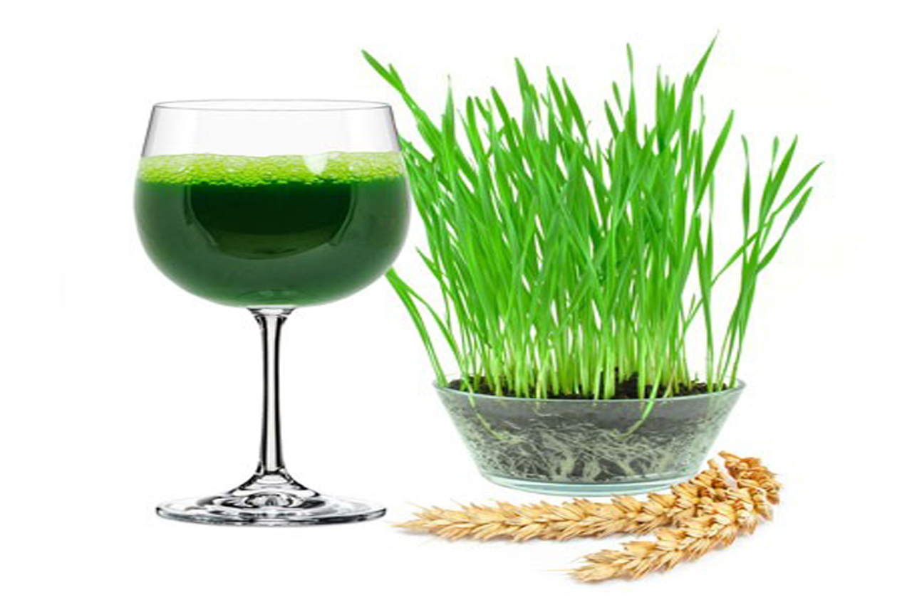 Витграсс в домашних условиях— пошаговый рецепт от проращивания до готового напитка