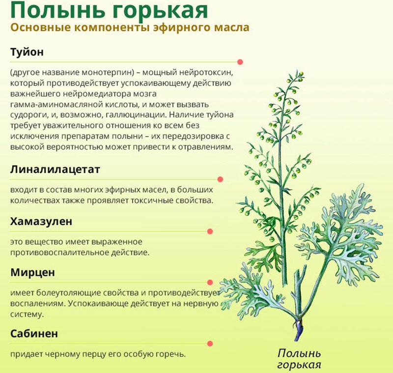 Трава полынь – лечебные свойства и противопоказания для мужчин и женщин - полонсил.ру - социальная сеть здоровья - медиаплатформа миртесен