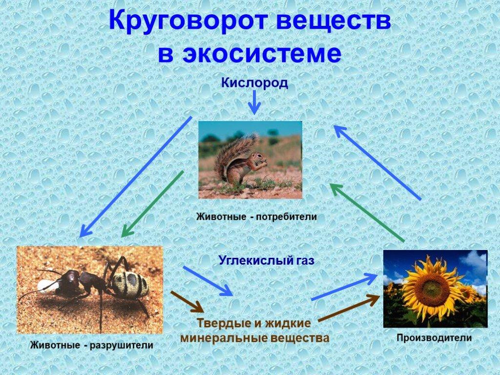 Круговорот веществ в биосфере: углерода, азота, воды, кислорода, фосфора, серы