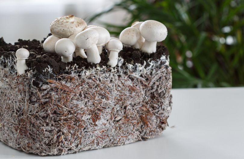 Что такое мицелий - виды грибка, симптомы и лечение