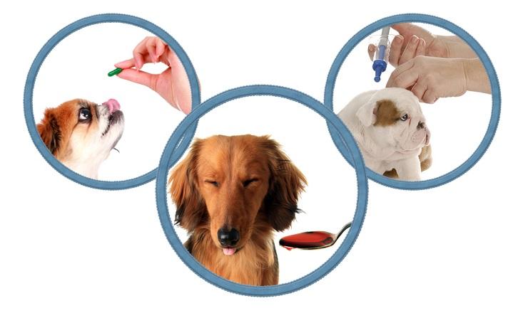Как глистогонить кошку. ???? необходимость дегельминтизации. особенности процедуры. правила дегельминтизации.