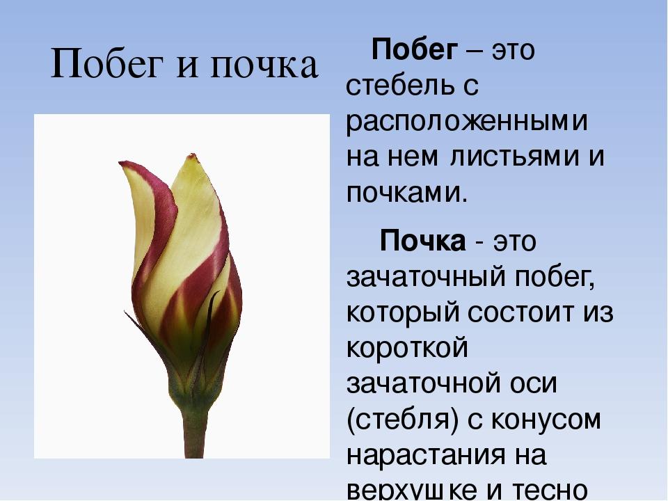 Побег (право) — википедия. что такое побег (право)