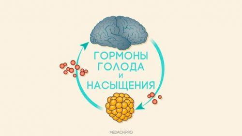 Гормон лептин: биохимическая сытость