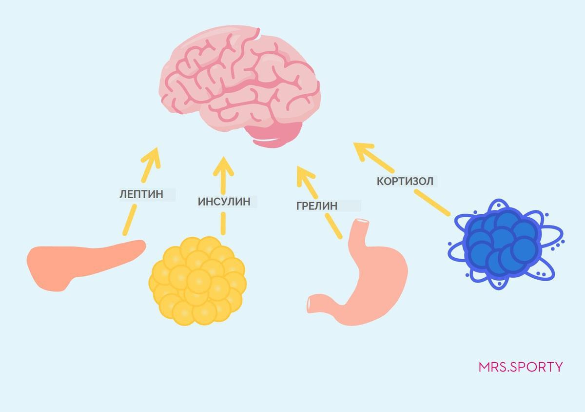 Лептин и лептиновая резистентность: все что вам нужно знать
