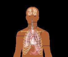 Симптомы коронавируса у человека: как проявляется covid-19, первые признаки у мужчин, женщин и детей    :: дни.ру