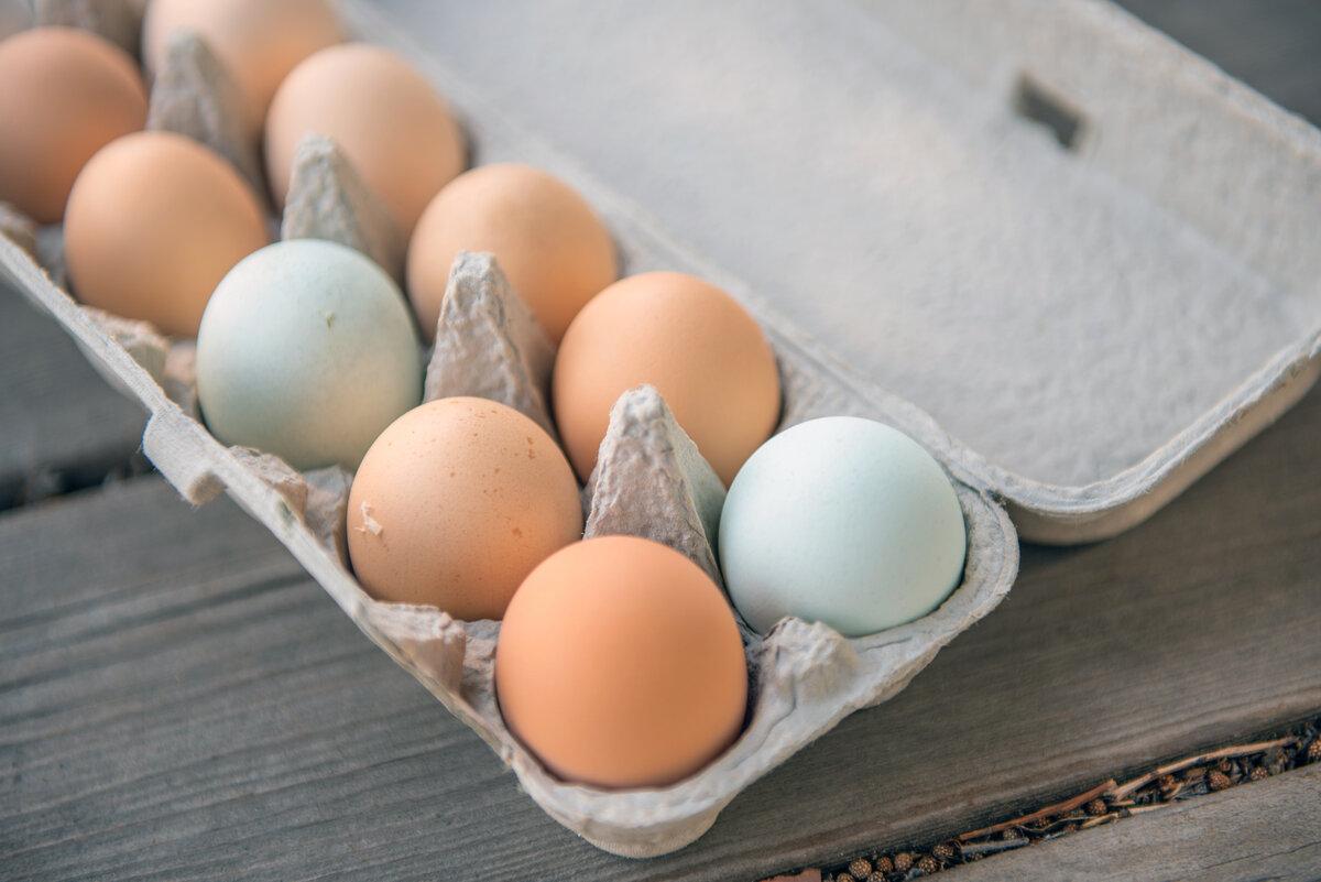 Энциклопедия - яйцо куриное