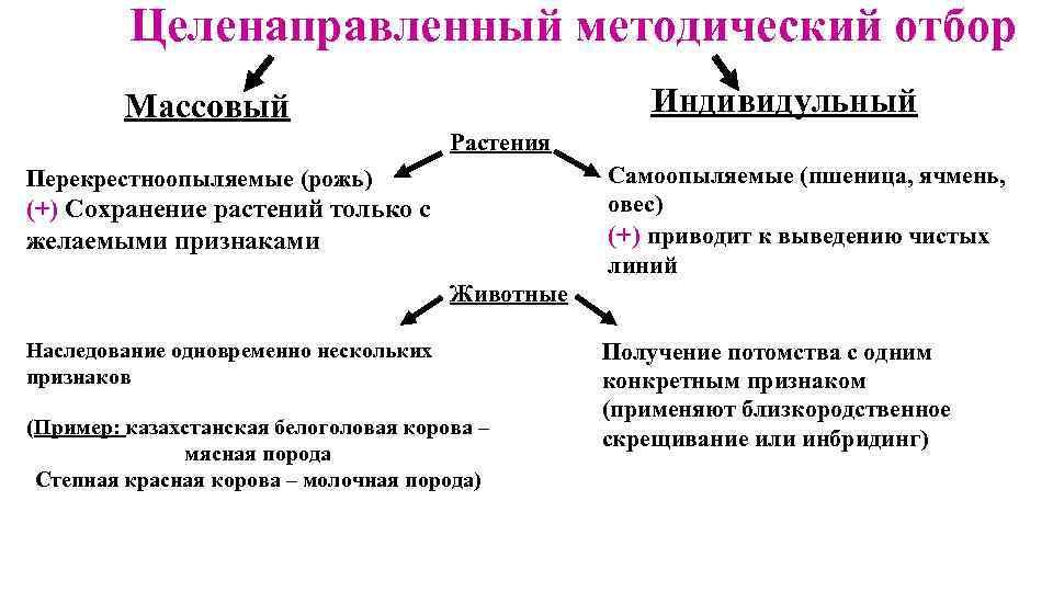 Массовый отбор в селекции: примеры, преимущества и недостатки :: syl.ru