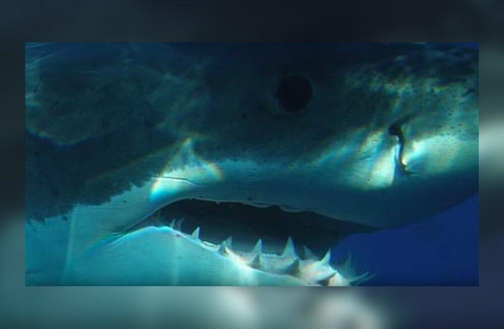 Мегалодон жив или вымер? фейки и правда 2018 - только факты, доказательства ∞ лагуна акул