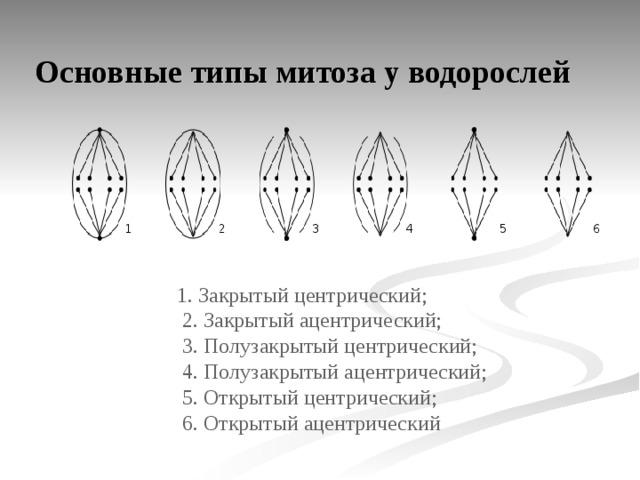 Митоз и стадии митоза. что такое митоз и какой в профазе митоза происходит процесс? коротко об интерфазе