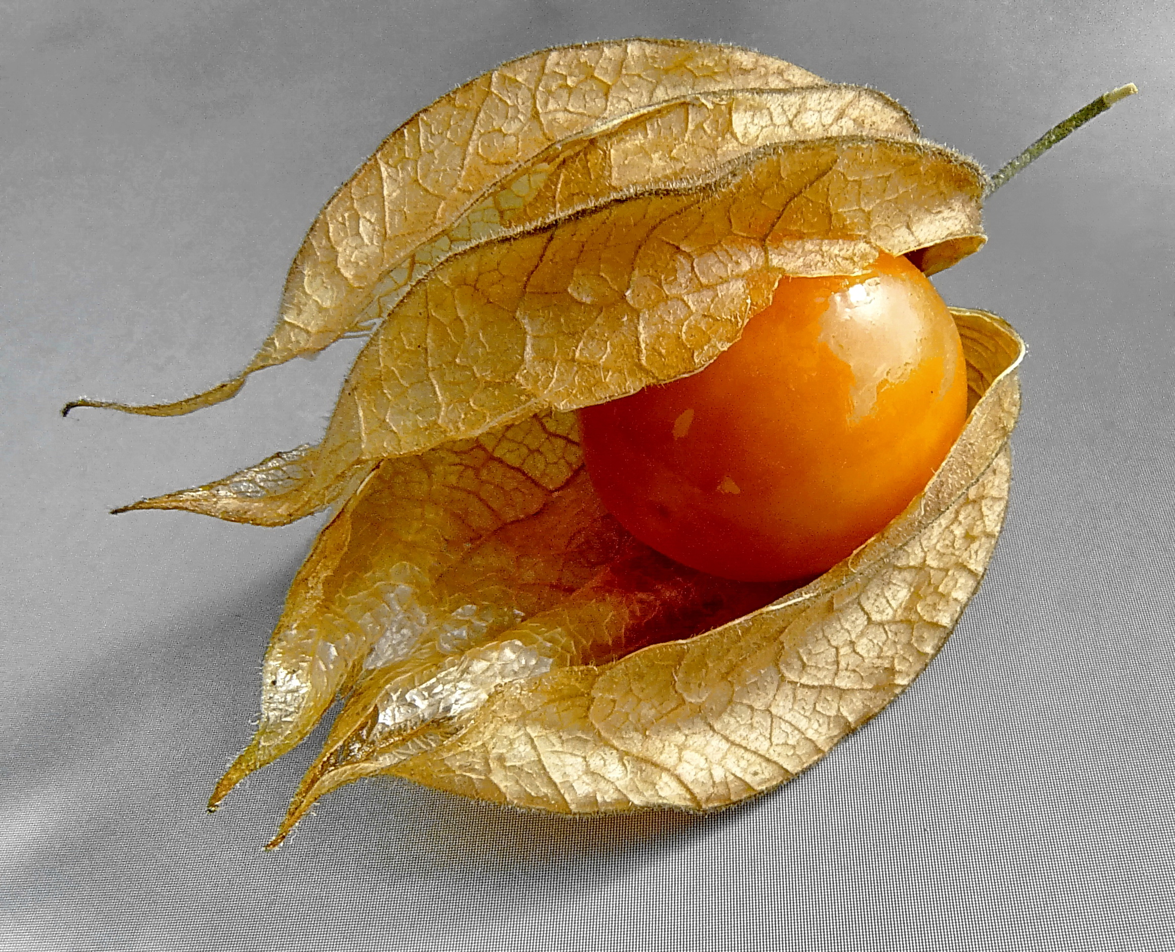 Физалис – выращивание, посадка и уход, сорта и приготовление блюд из овощного физалиса - достойная  жизнь  на  пенсии - медиаплатформа миртесен