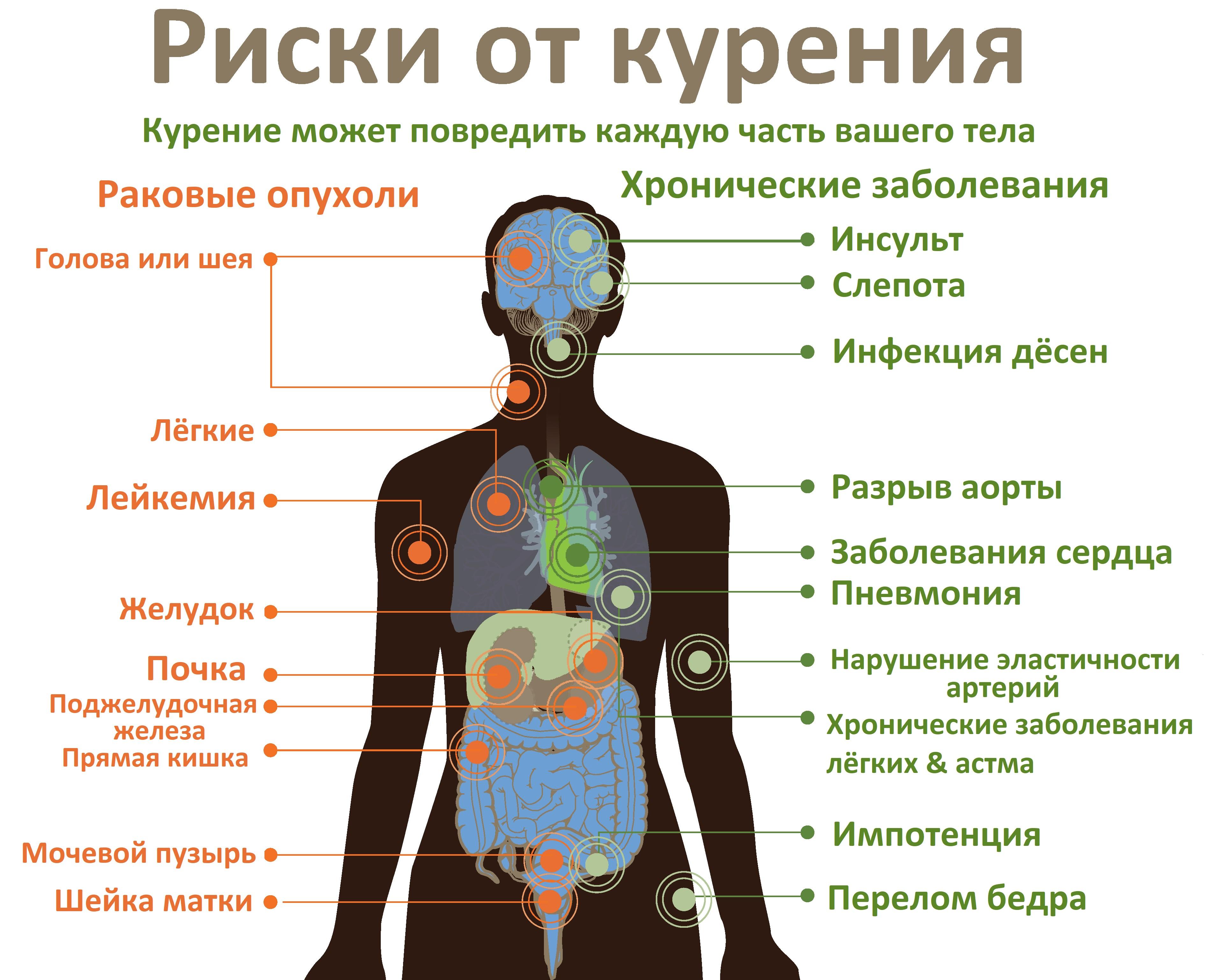 Никотин: обзорная статья на популярный яд | pro-курение