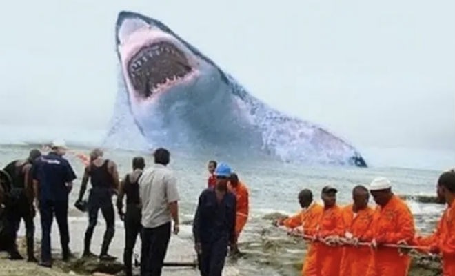 Древняя акула мегалодон: описание, размеры, интересные факты