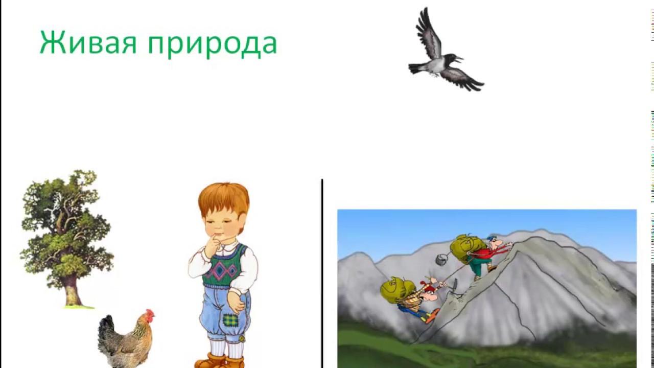 Неживая природа - это... определение, особенности и отзывы - gkd.ru