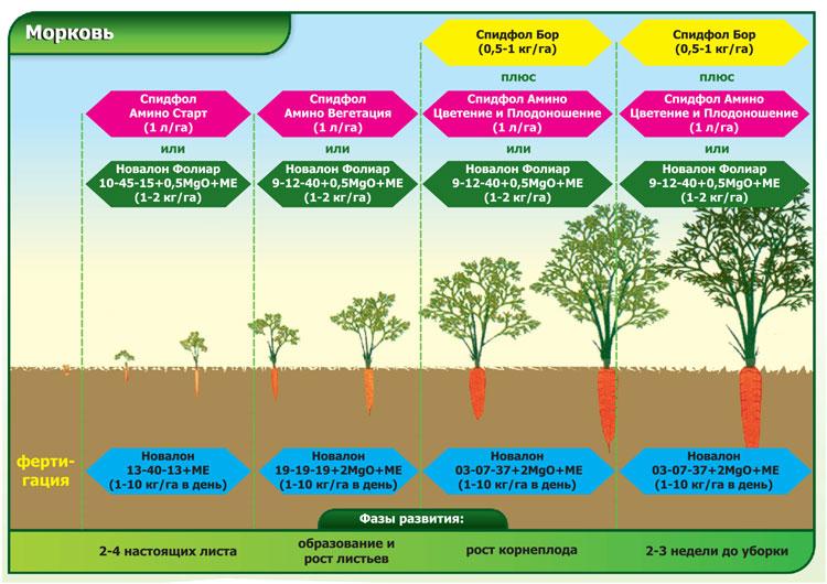 Вегетационный период растений: определение сроков вегетации