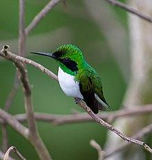Где живут колибри – среда обитания и повадки