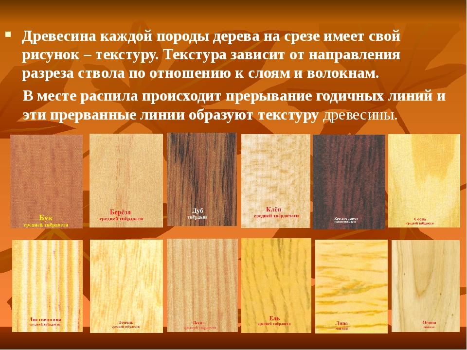 Влажность пород древесины - естественная, равновесная, абсолютная относительная