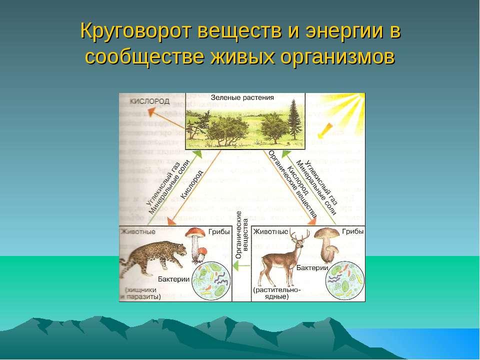 Понятие о биологическом круговороте - рассашко и.ф. и др. общая экология