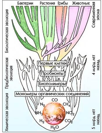 Заполните таблицу эволюция пробионтов - универ soloby