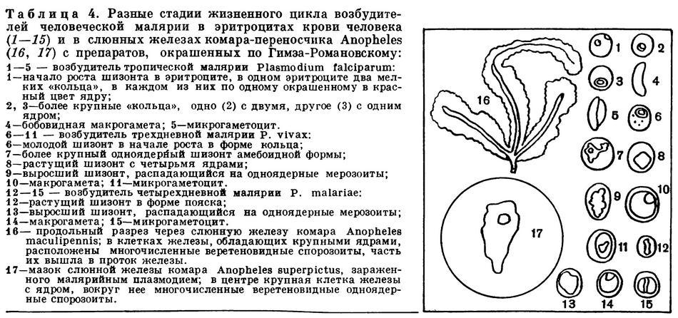 Кокцидиоз у кур: симптомы и лечение, как выглядит на фото, чем лечить болезнь у несушек, признаки и профилактики, народные средства, лекарства и другие препараты