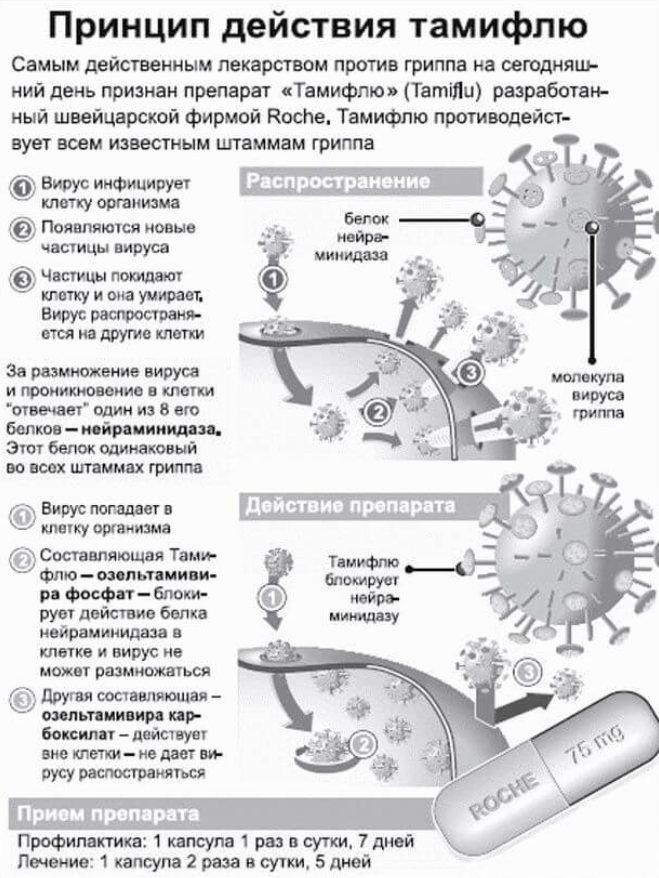 Тамифлю: инструкция, отзывы, аналоги, цена в аптеках - medcentre.com.ua