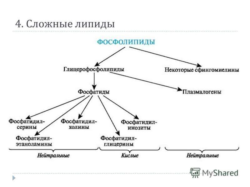 Биохимическая классификация липидов