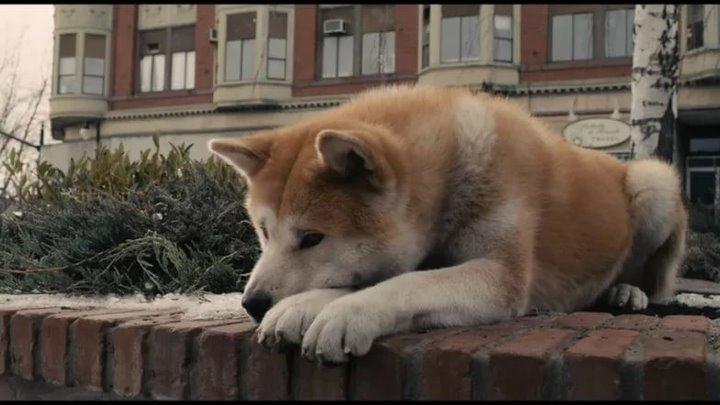 Кличка хатико: перевод с японского, имя для собаки, значение.