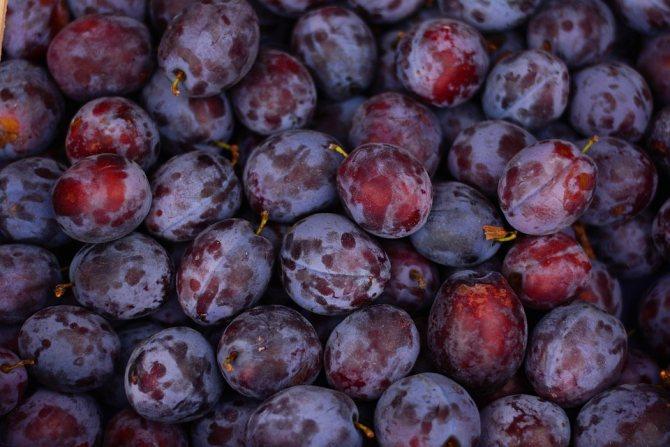 Слива — это ягода или фрукт? слива — это дерево или кустарник?