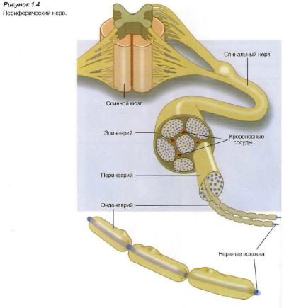 Что означает диагноз «тригеминальная невралгия» и какими способами лечат воспаление тройничного нерва