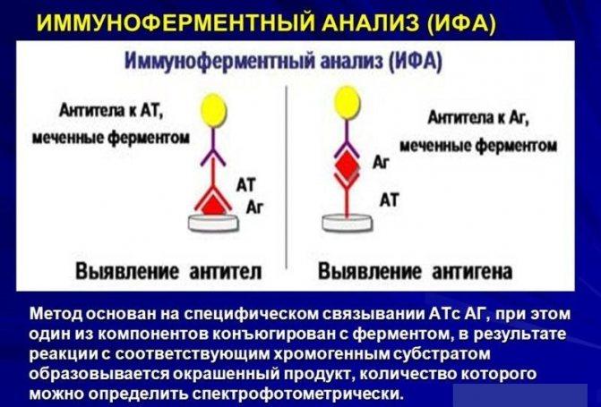 Иммуноферментный анализ крови при беременности
